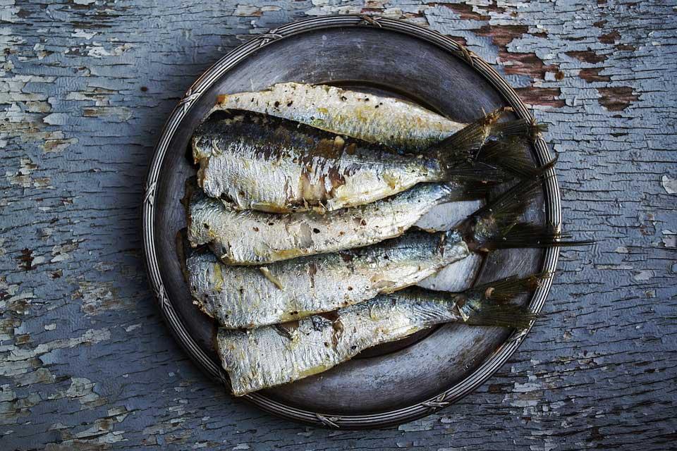 Omega-3-Fette im Fisch